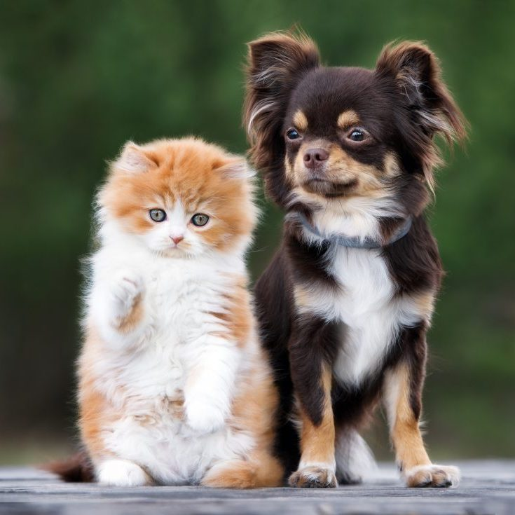 dog and kitten together